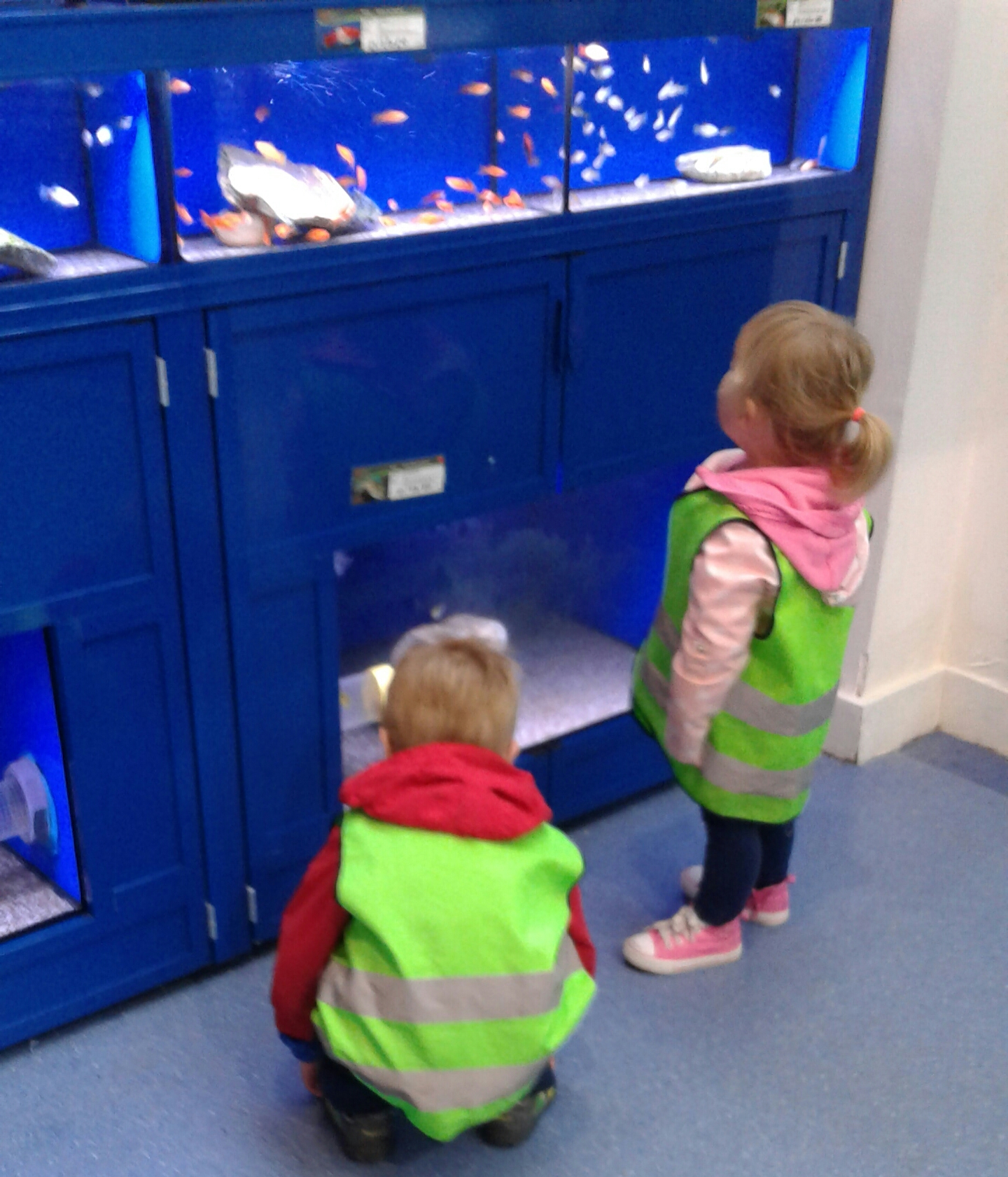 buying fish for our fish tank active kids nurseries nurseries